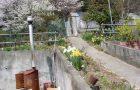 果樹園の入り口と 水仙