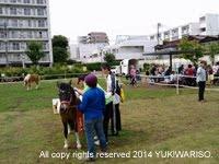 馬をパートナーとした活動②